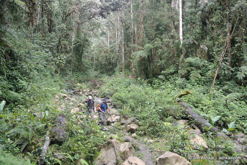 Papua Jungle.