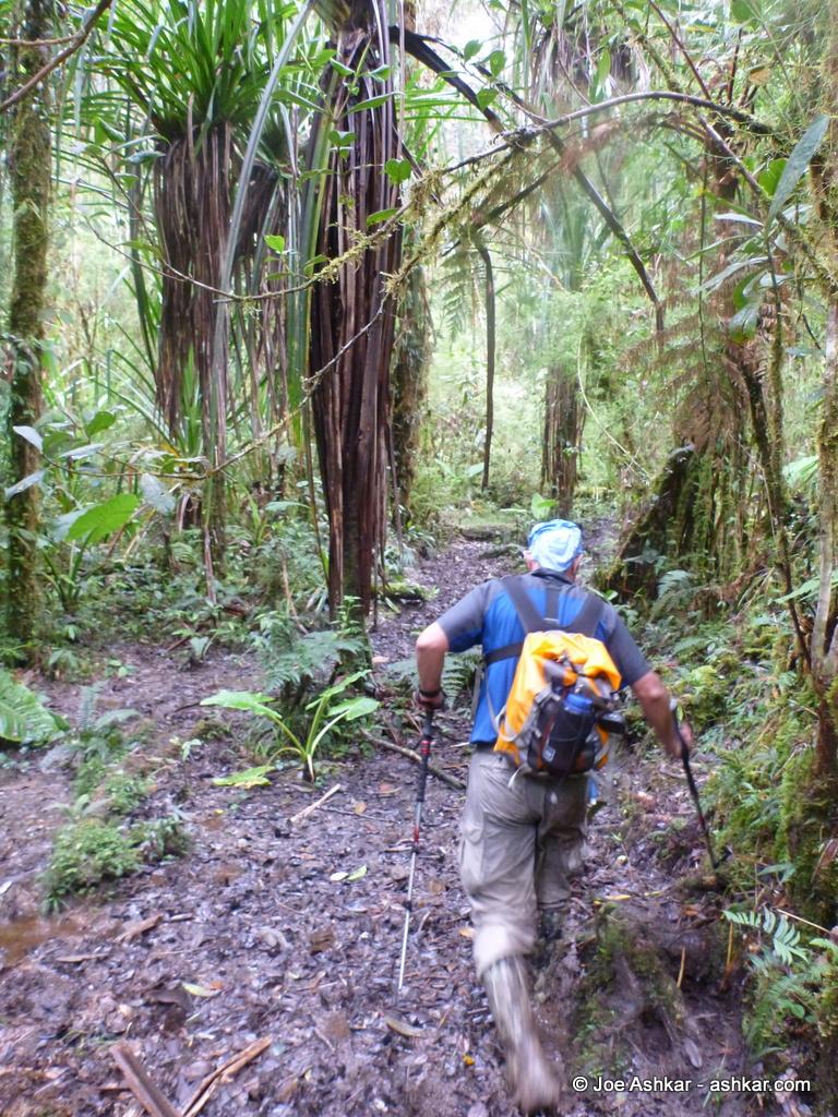Mud in the Jungle.