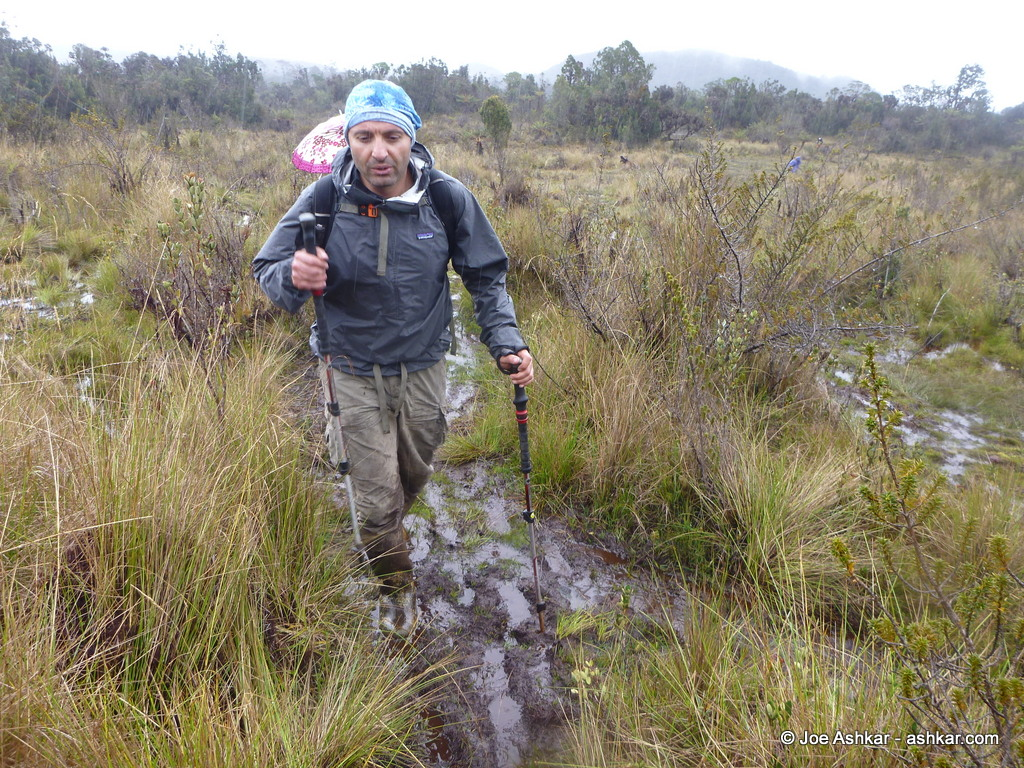 Crossing the muddy swamps on the way to Carstensz.
