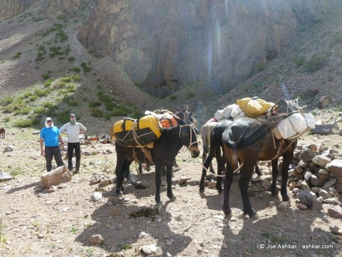 Mules with our gear and food.